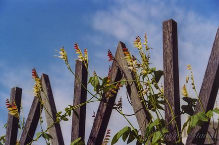 california-Getty-Center-gardens-fence-fl