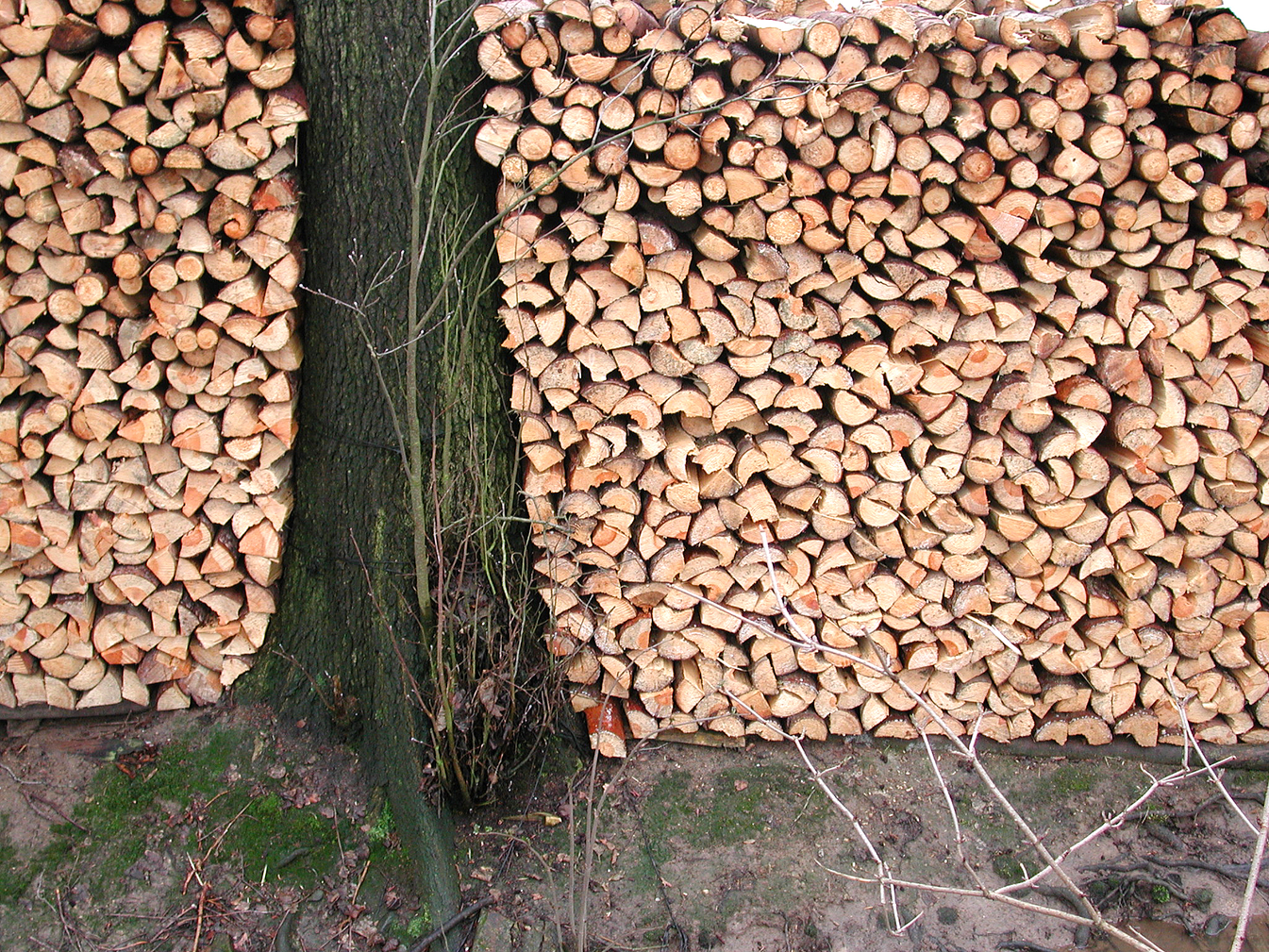 Dscn3243_Baum und Scheite.tif