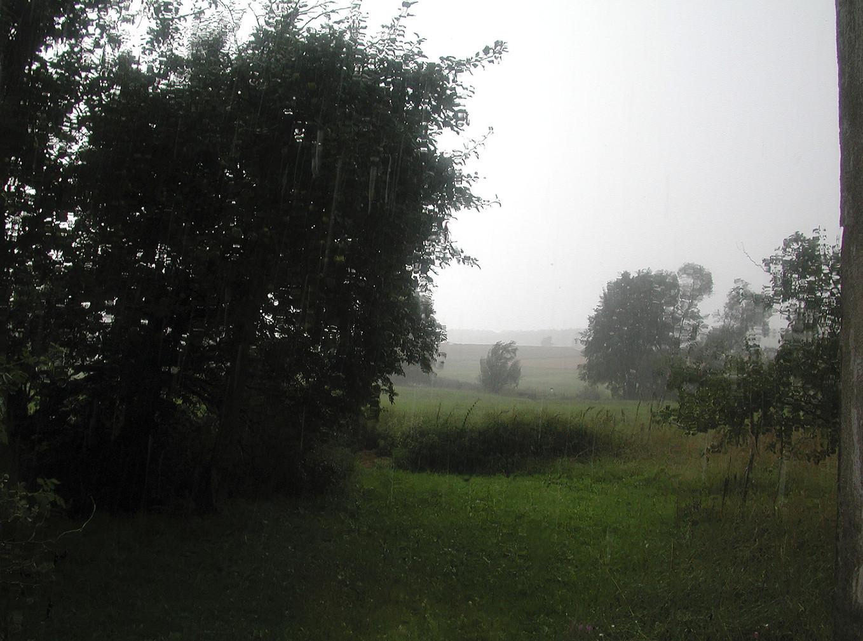 14_Von Bäumen, 2004, Fotografie, 30 x 40