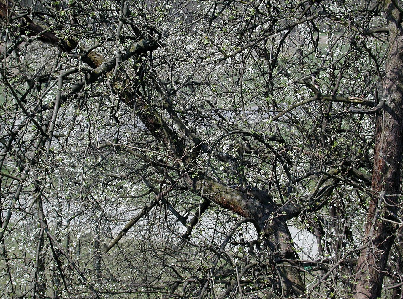 08_Von Bäumen, 2003, Fotografie, 30 x 40