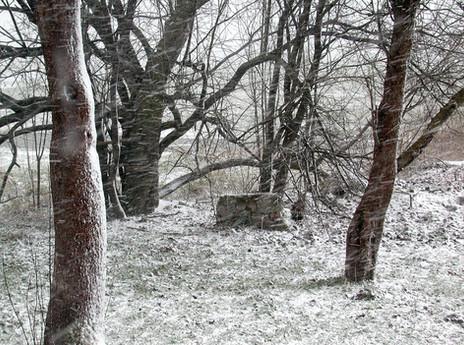 20_Von Bäumen, 2004, Fotografie, 30 x 40