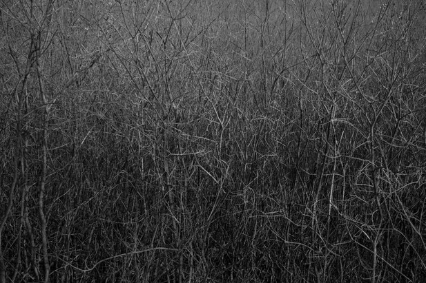 02_Hecken, 2011-2018, Fotografie, 30 x 4