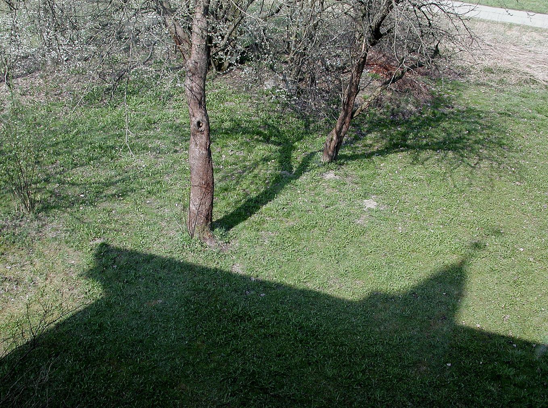 10_Von Bäumen, 2003, Fotografie, 30 x 40