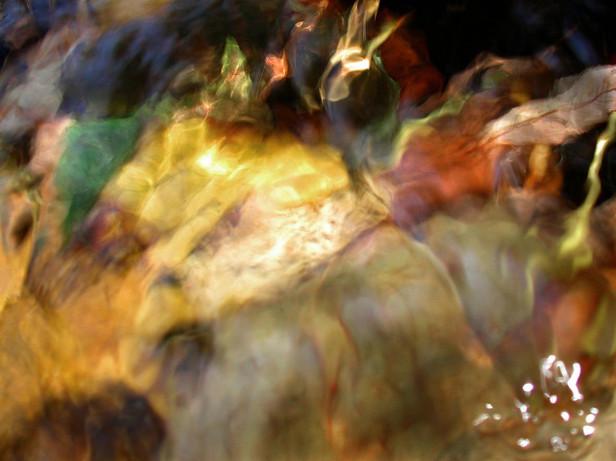 02_Unterwasserblätter, 2000, Fotografie,