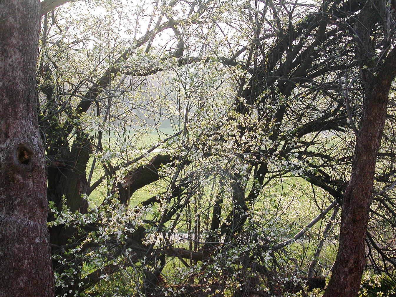 09_Von Bäumen, 2004, Fotografie, 30 x 40
