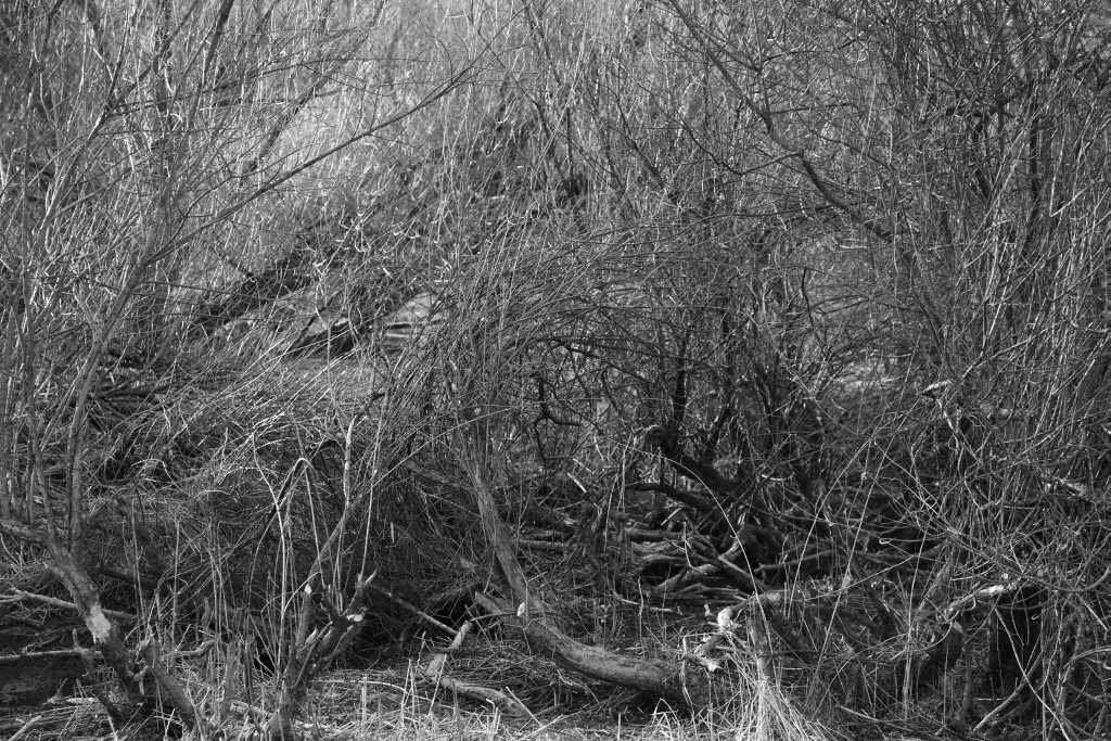 05_Hecken, 2011-2018, Fotografie, 30 x 4