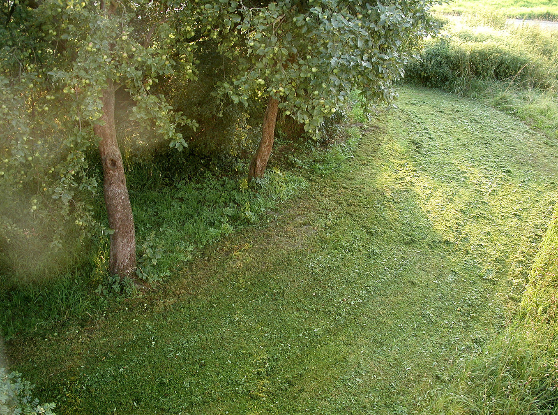 15_Von Bäumen, 2004, Fotografie, 30 x 40