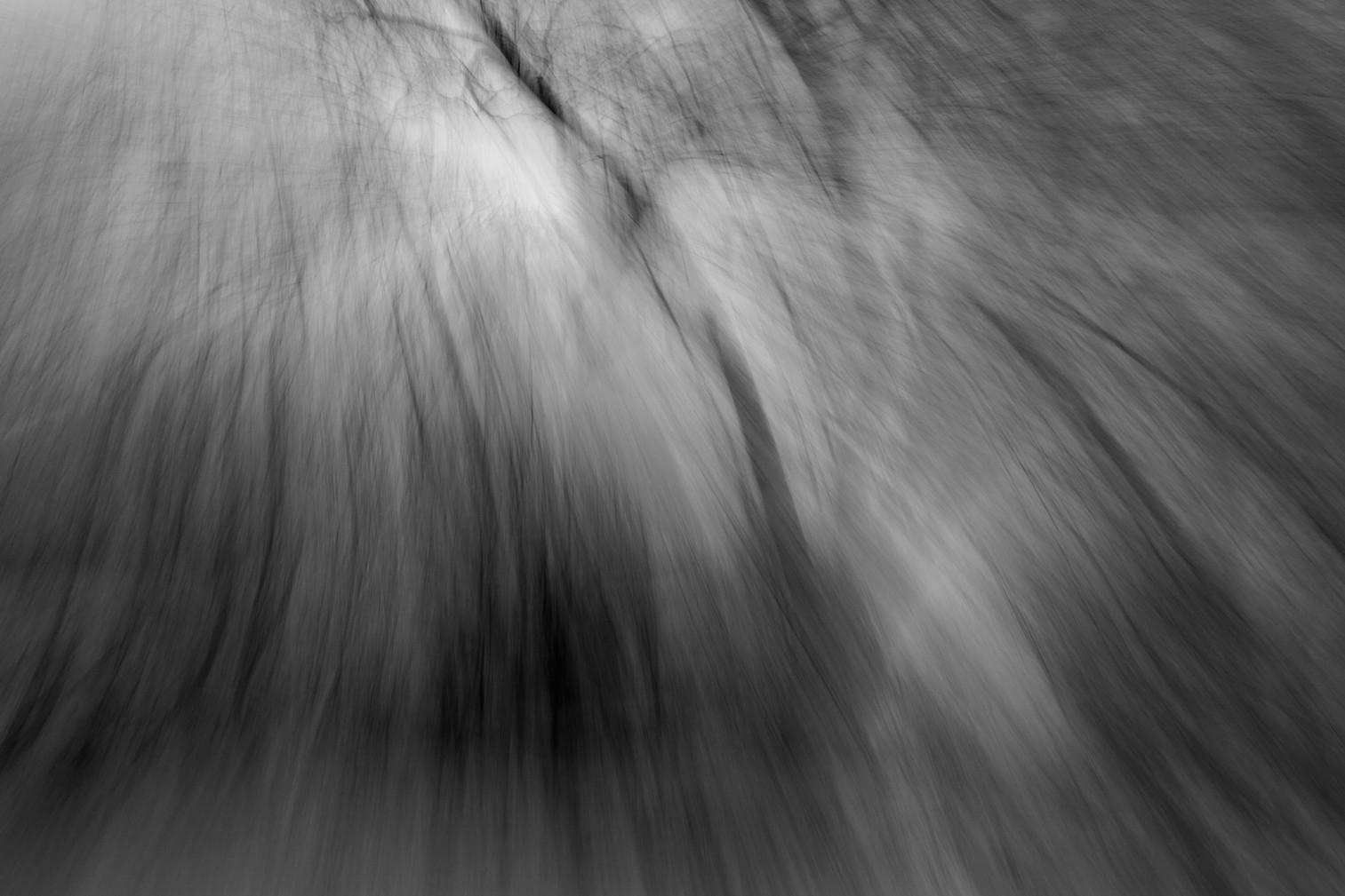 04_Hangwald (gebeugtes Licht), 2013.jpg