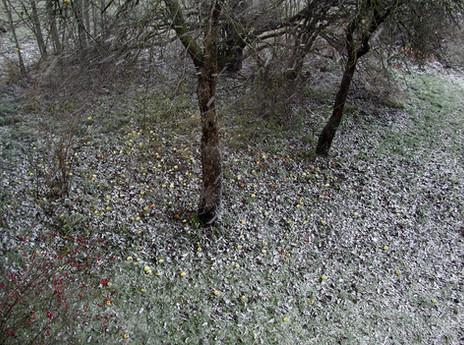 02_Von Bäumen, 2004, Fotografie, 30 x 40