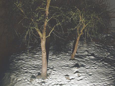 04_Von Bäumen, 2005, Fotografie, 30 x 40