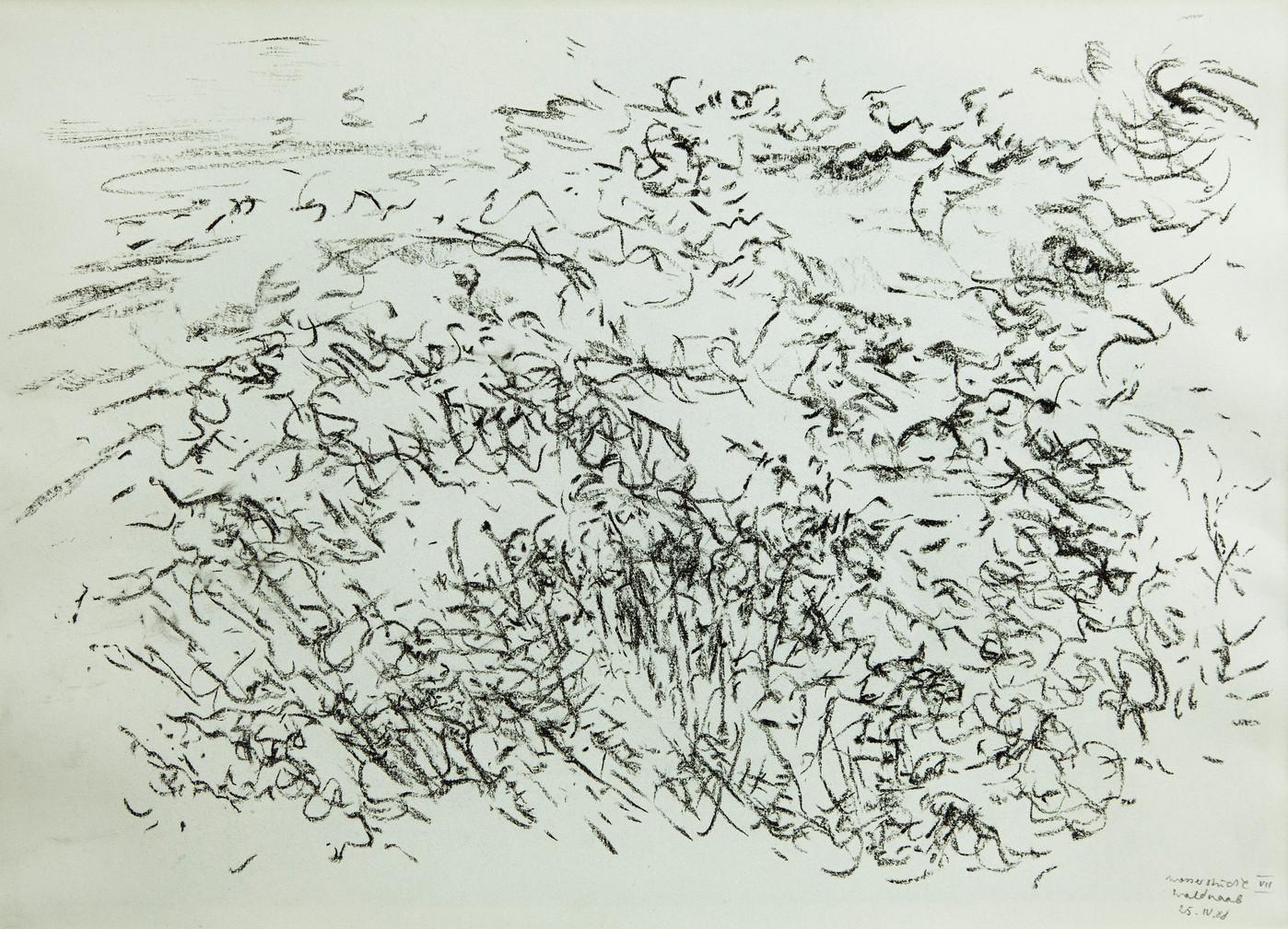 07_Wasserstudie VII - Waldnaab, 25.IV.19