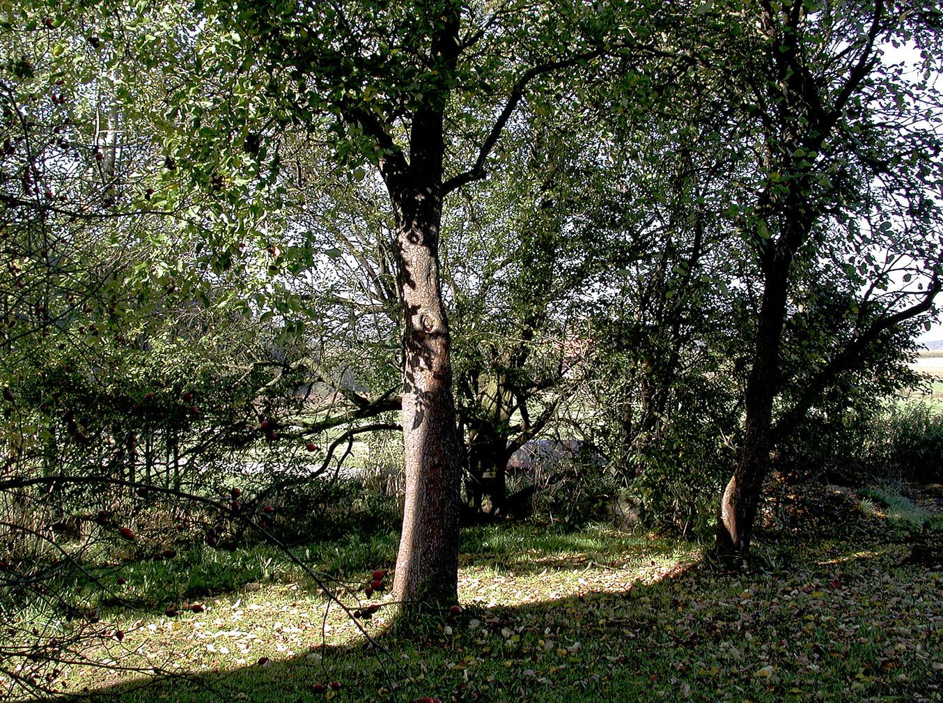 16_Von Bäumen, 2001, Fotografie, 30 x 40