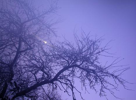 03_Von Bäumen, 2005, Fotografie, 30 x 40