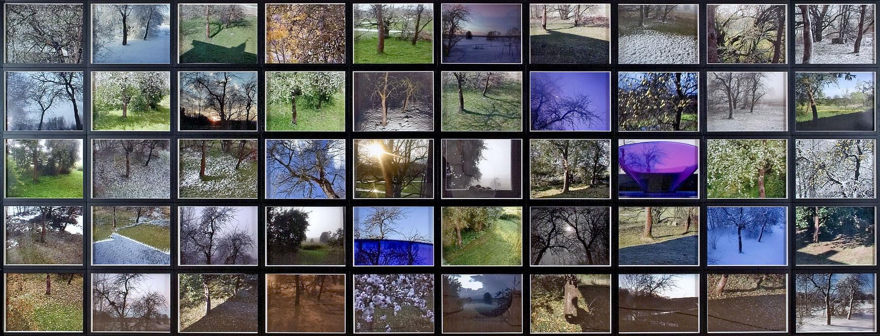 22_Von Bäumen, Fünfzig Blicke aus sieben