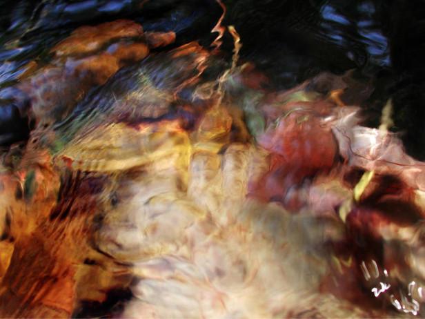 07_Unterwasserblätter, 2000, Fotografie,