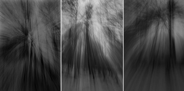 Hangwald-Triptychon I, 2013, 200 x 400cm