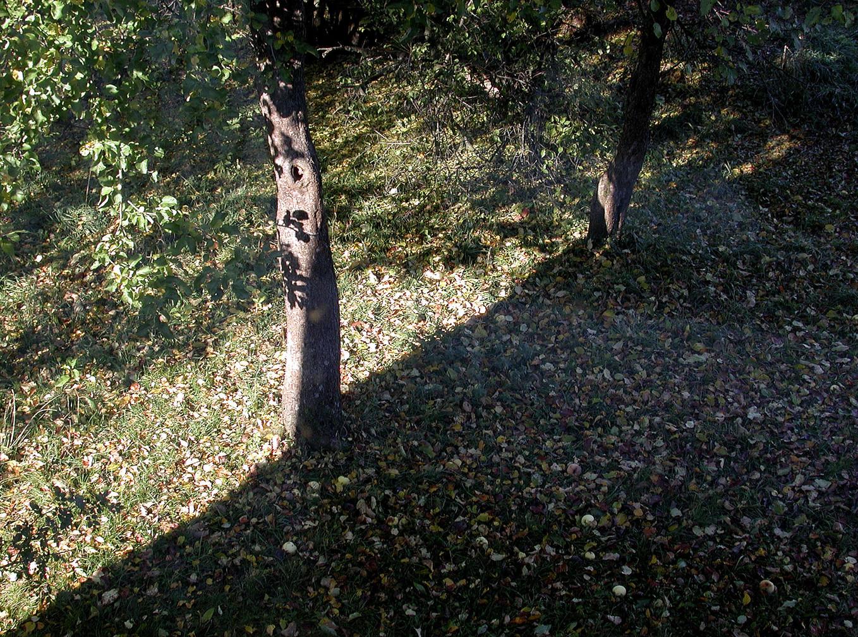 19_Von Bäumen, 2003, Fotografie, 30 x 40