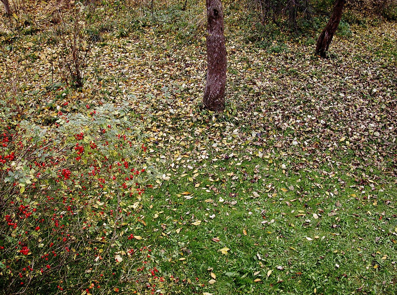 18_Von Bäumen, 2004, Fotografie, 30 x 40