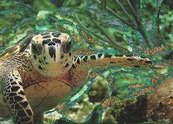 Turtle_edited_edited.jpg