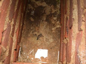 Hoje é aniversário de Santa Leopoldina, mas já ouviu a história do túmulo que enche de água?!