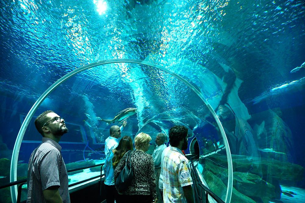 Turistas conhecendo o AquaRio