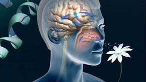 anosmie post covid, l'hypnose serait-elle une solution efficace?