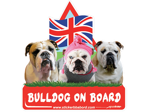 Bulldog on board