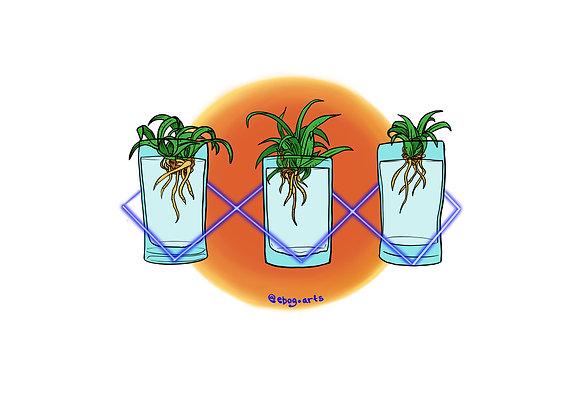Baby Spider Plants Sticker 3.5 inch