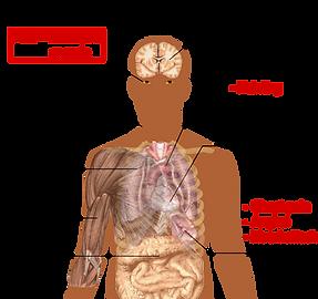 Symptoms_of_anemia.png