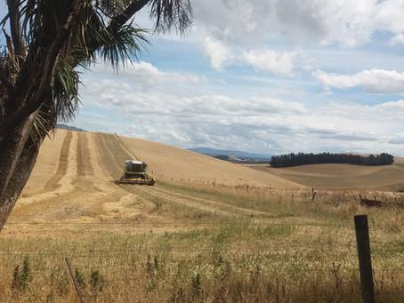 Harvesting 2017