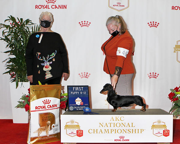 Royal Canin National Championship 2020 B