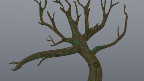 Tree - Color