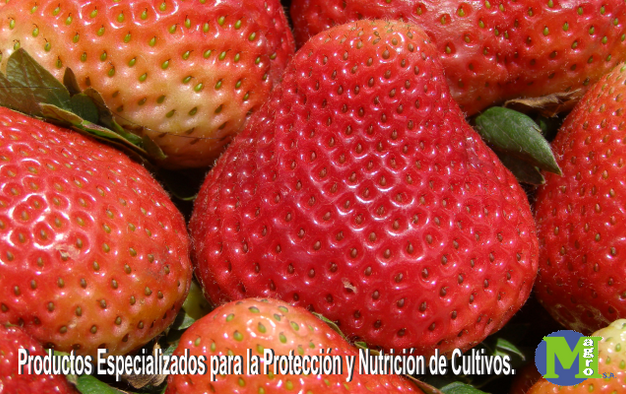 Magrofresas.png