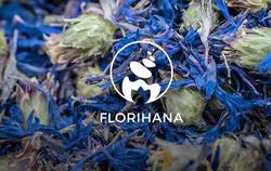 logo-flohina