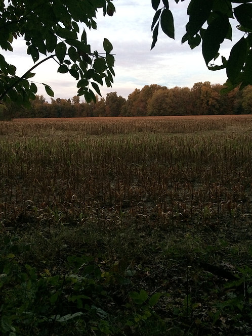 November Hunt 7