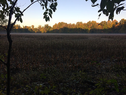November Hunt 9