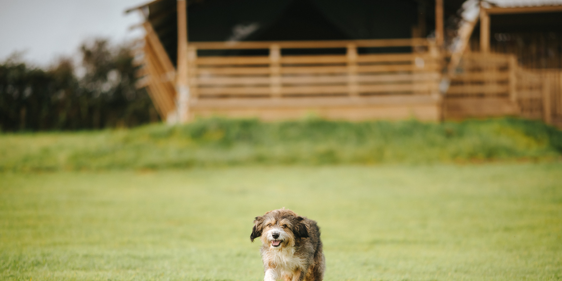 dog friednly camping Gower South Wales U