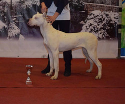 Pakhra Magnifika Stefani - Puppy Grand Winner at FEHOVA Winter Dog Shows 2018