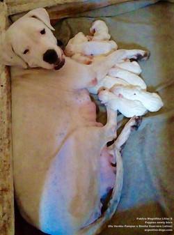 Pakhra Magnifika Litter S newly born