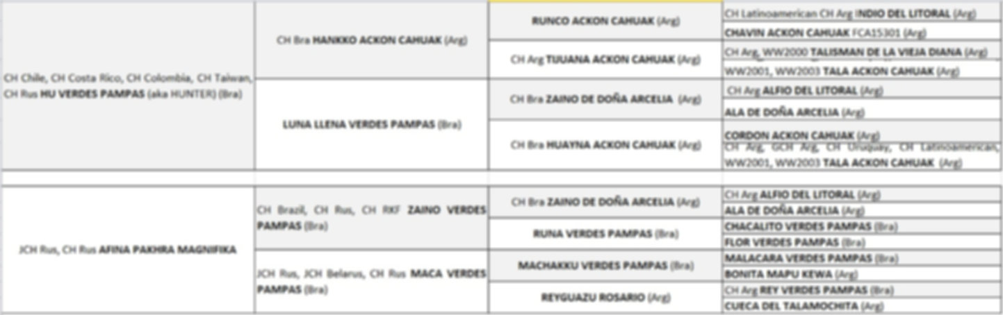 Pakhra Magnifika dogo argentino kennel