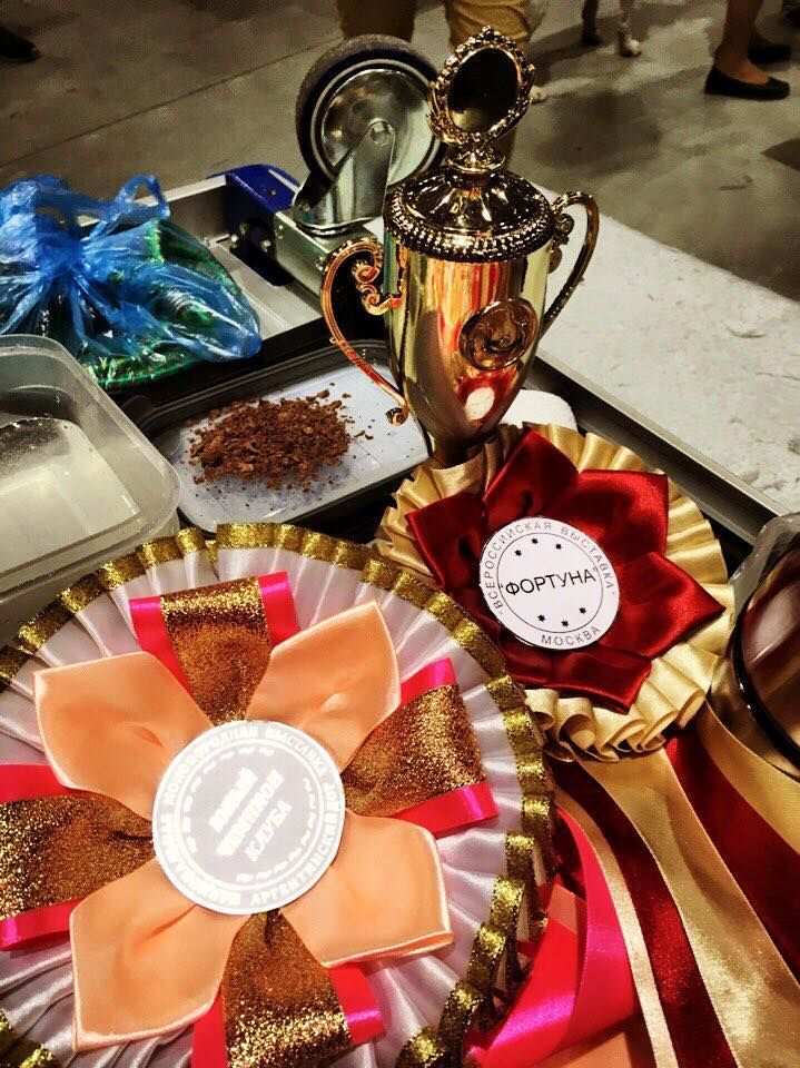 Results from Speciality Show 27-11-2016