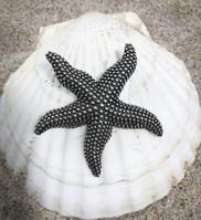 Sea Star Pindant
