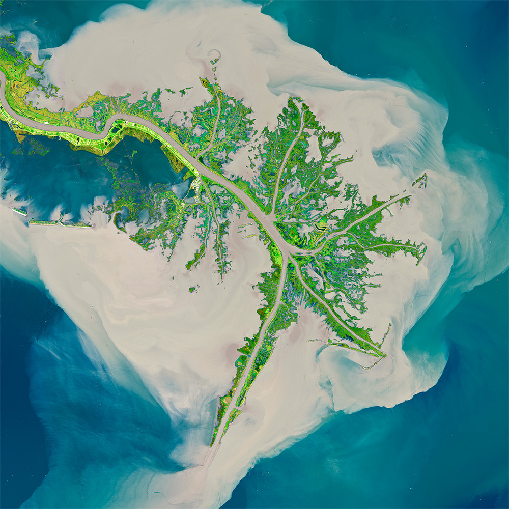 Satellite Image of the Bird's Foot Delta