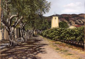 Mondavi Vineyard