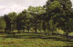 Hawley's Corners Cows