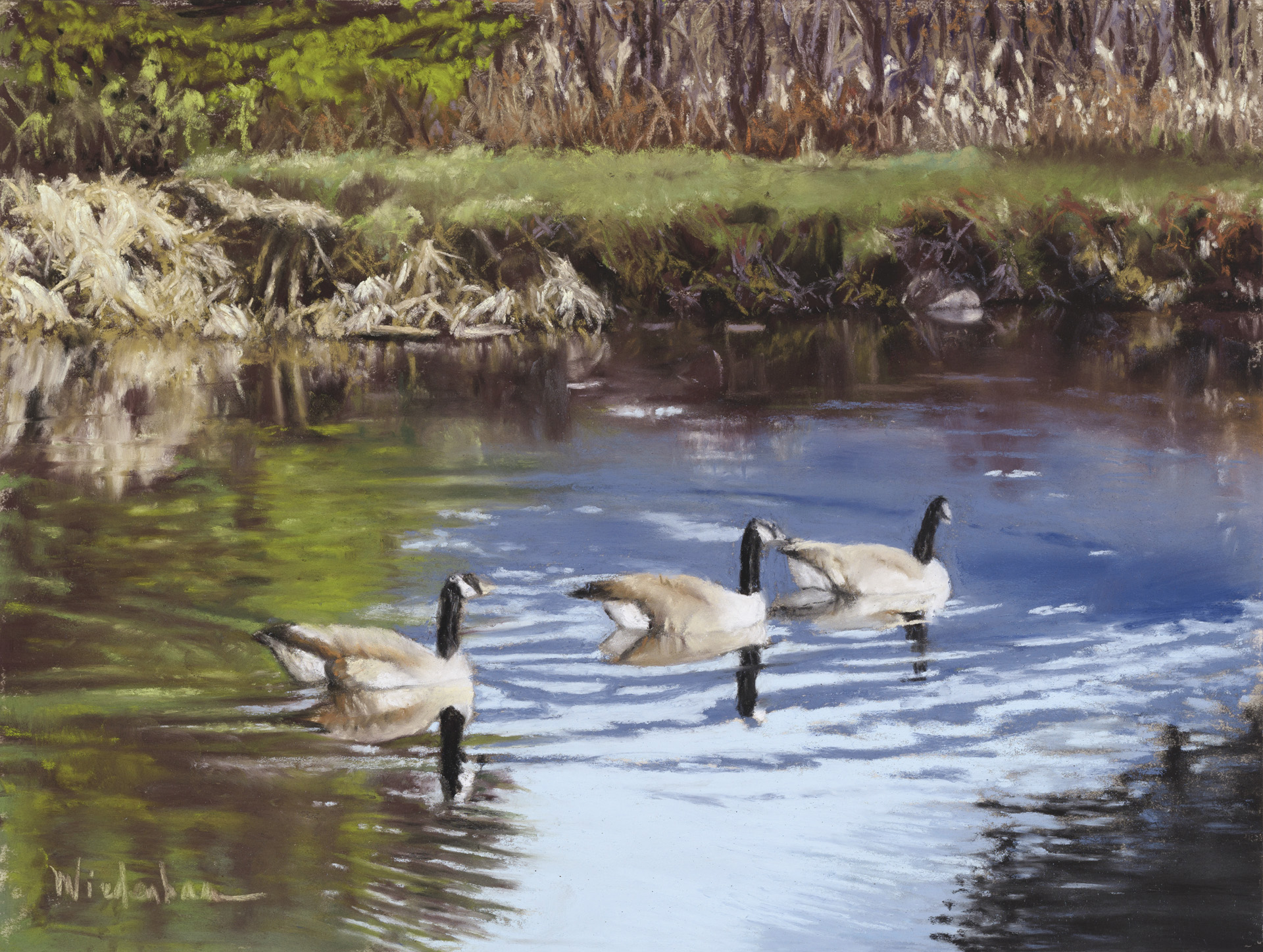 Rock Hill Pond Geese