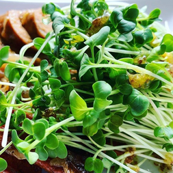 Morning Snack With Microgreens.png