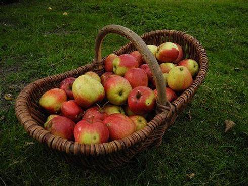harvest-2647099__340.jpg
