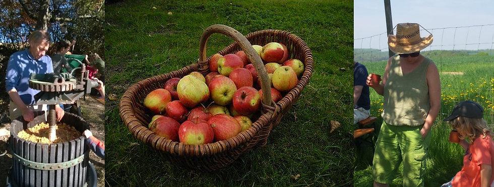 Apfelernte mit Kindern.jpg