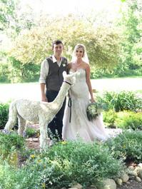 A Bride and Alpacas II